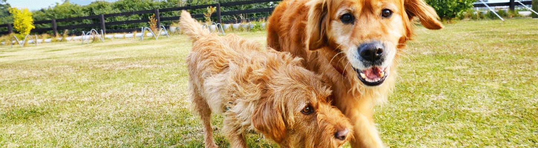 老犬ホーム協会設立の背景