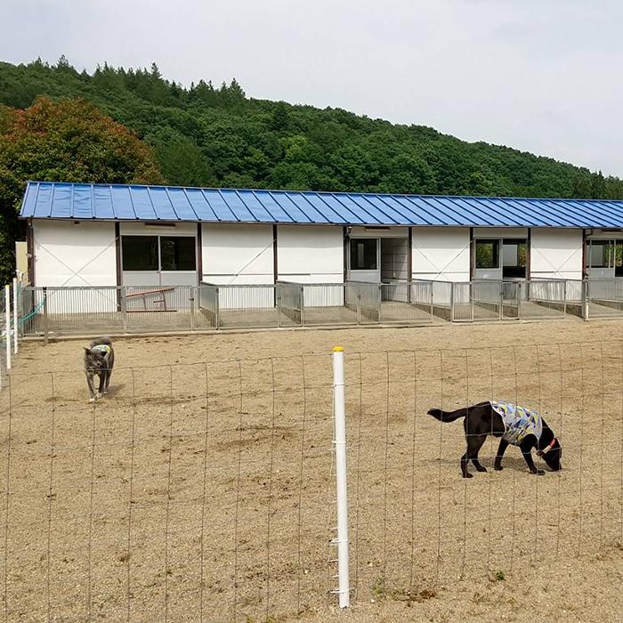老犬ホームトップ 栃木犬舎